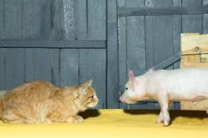 Can Cats Eat Pork?