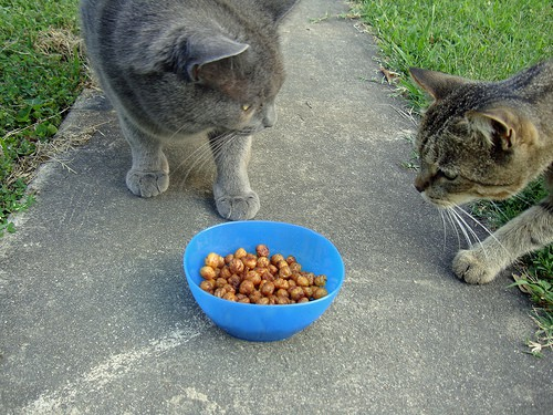Can Cats Eat Chickpeas?
