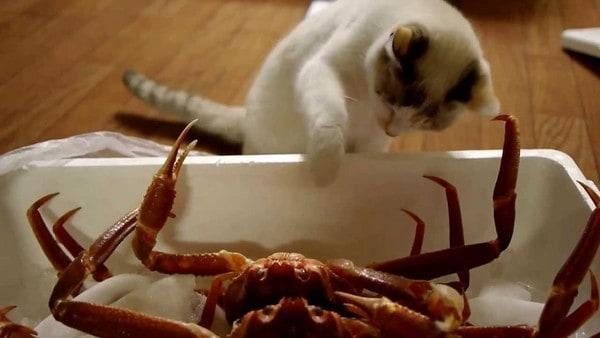 can cats eat crab cats how. Black Bedroom Furniture Sets. Home Design Ideas
