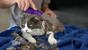 KONG Cat Zoom Groom used on cat
