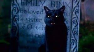 thackery binx cat