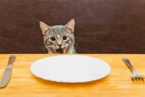 cat shocked because there is no food on the plate