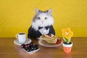cat sitting in front of a plate of pancakes