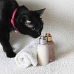 cat looking at the best cat shampoo bottles