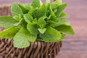 mint in a basket