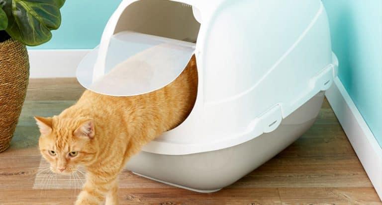 best cat litter box