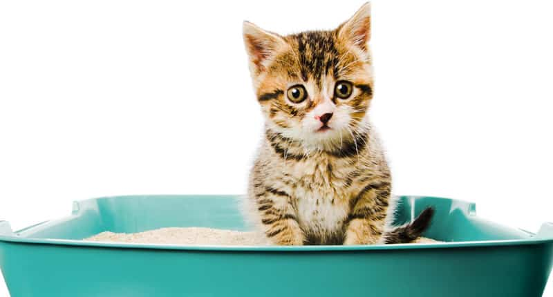 best litter for kittens