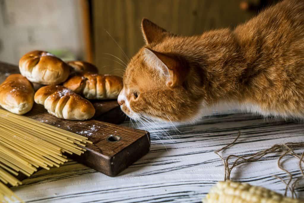 cat wondering if the spaghetti taste good