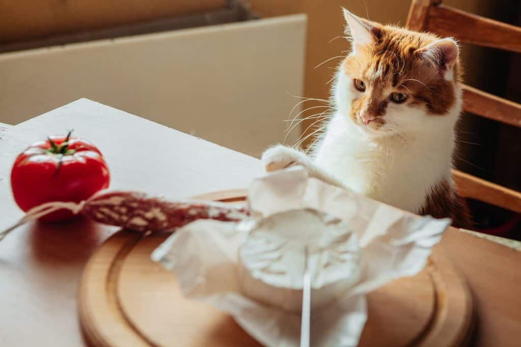 cat looking at the salami on the table