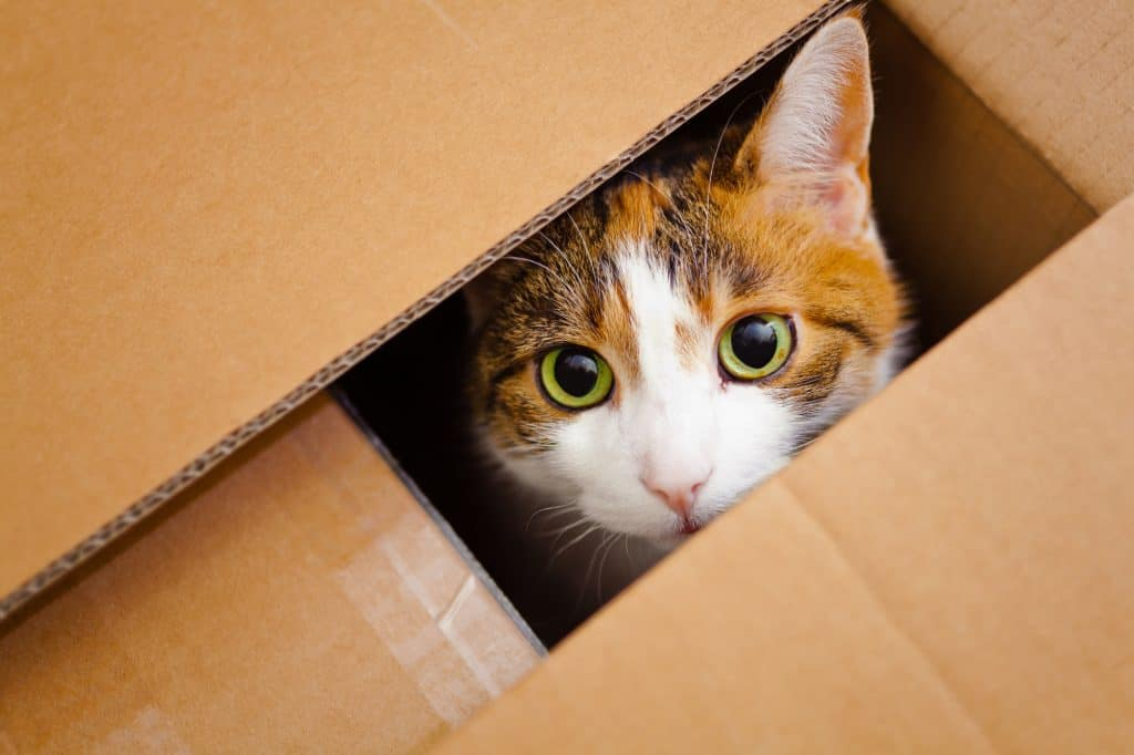 cat sitting in a box and watching