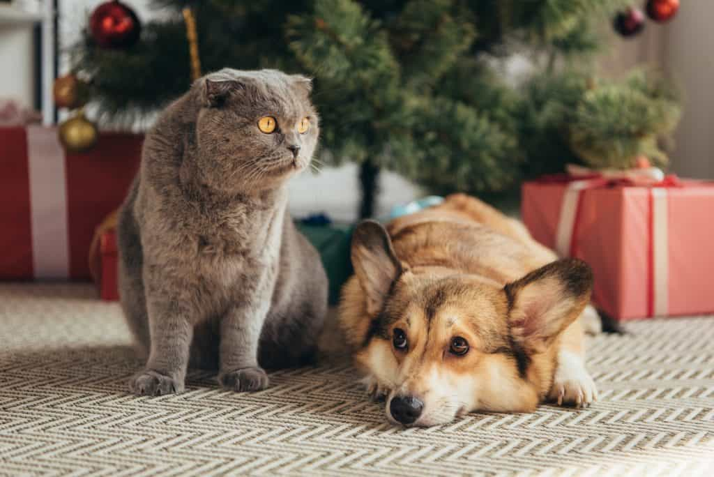 confused cat sitting next to a dog