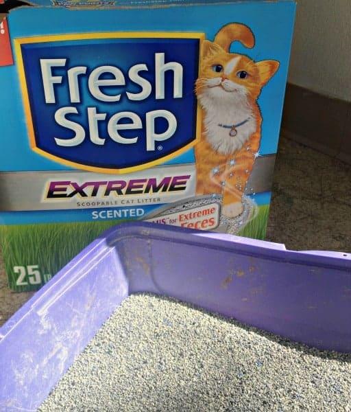 Best Cheap Cat Litter