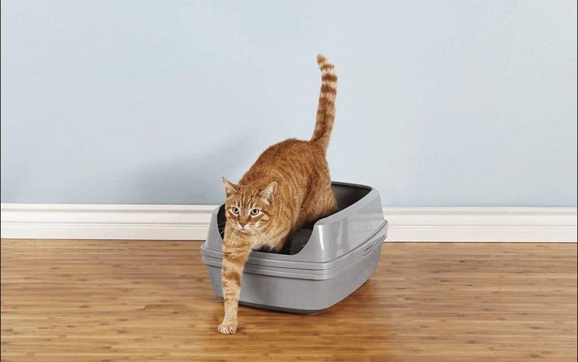 Best Sifting Litter Box