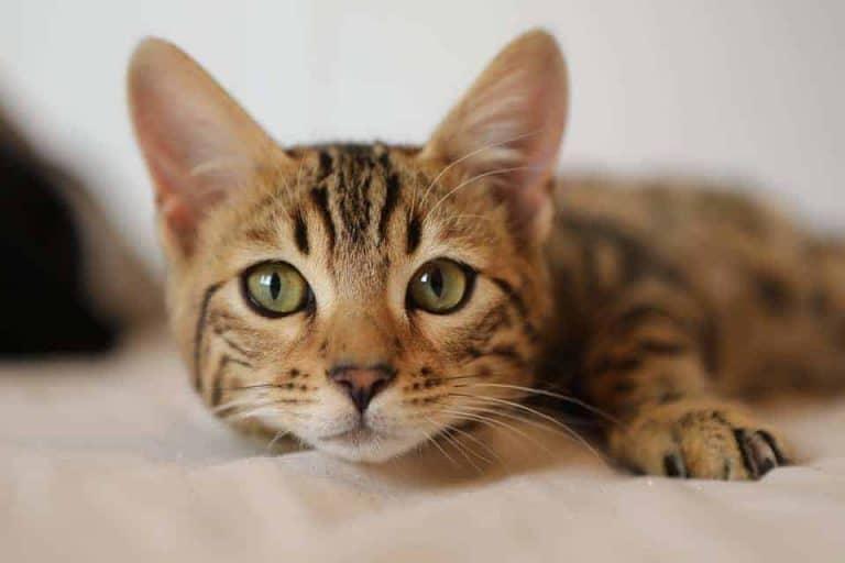 Cat-Funny-Cat-Cute-Cat-Cute-Cat-Compilation