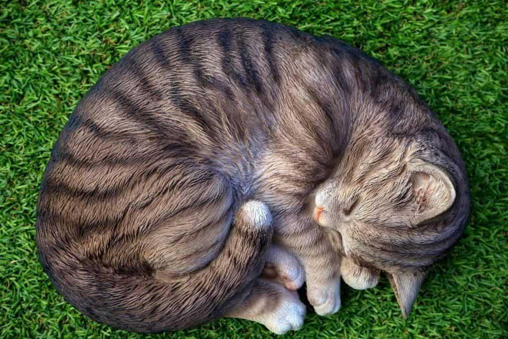 adorable-animal-animal-photography-385960