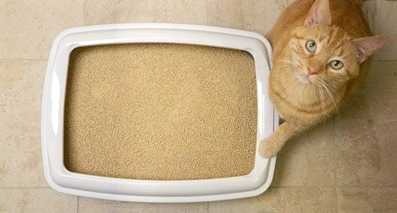best-natural-cat-litter