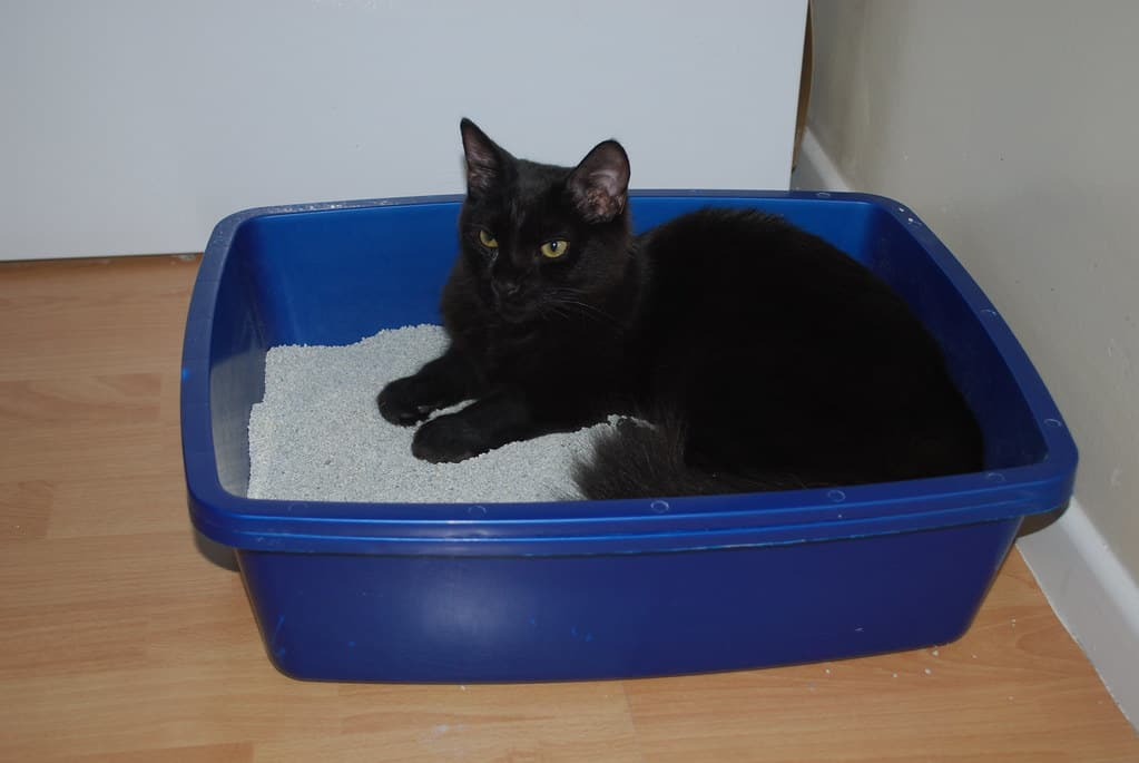black-cat-sleeping-in-a-litter-box