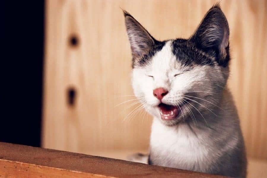cat-blink-e1562989065329