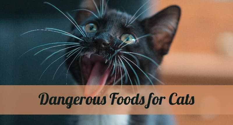 dangerous-foods-for-cats-01
