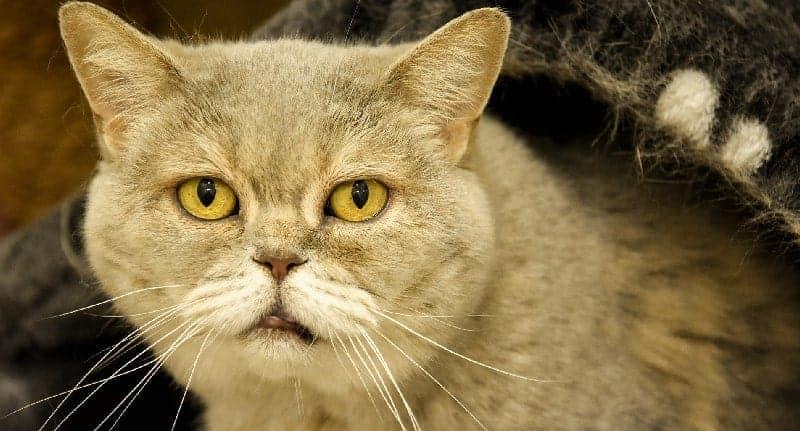senior-cat-food-01