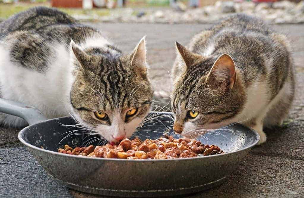 Cats eating sweet cat food