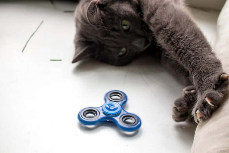 Spinner Cat Toy The Top Grey Home