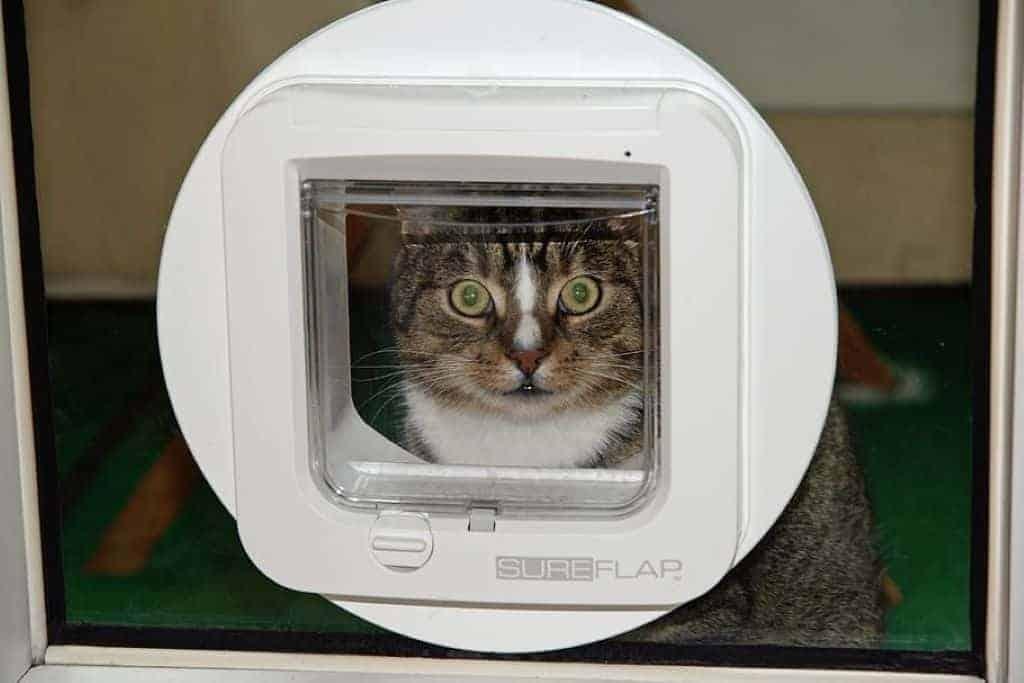 cat flap cat's eyes