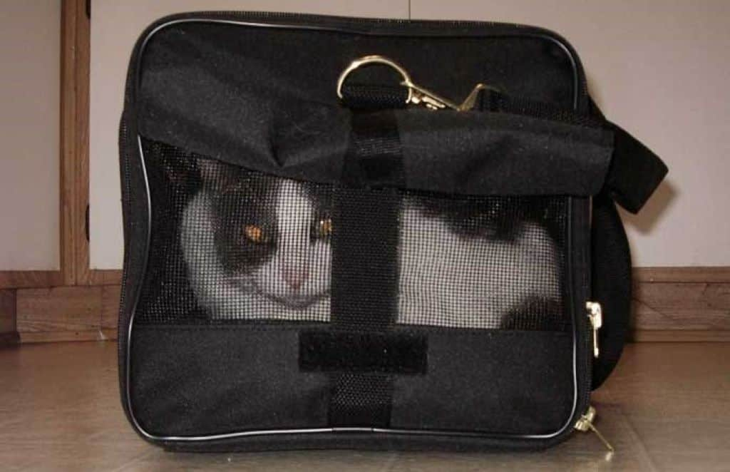cat in a black carrier